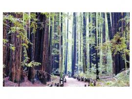 Armstrong Redwoods Trail Run Photo