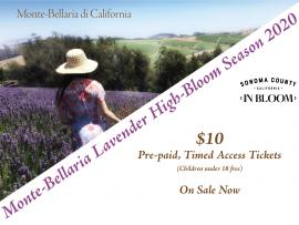 Monte-Bellaria Lavender High-Bloom 2020 Photo