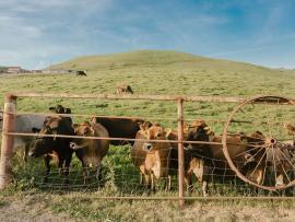 Farm and Cheese Tour Photo