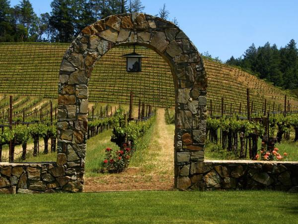 Pezzi King Vineyards estate Photo 2