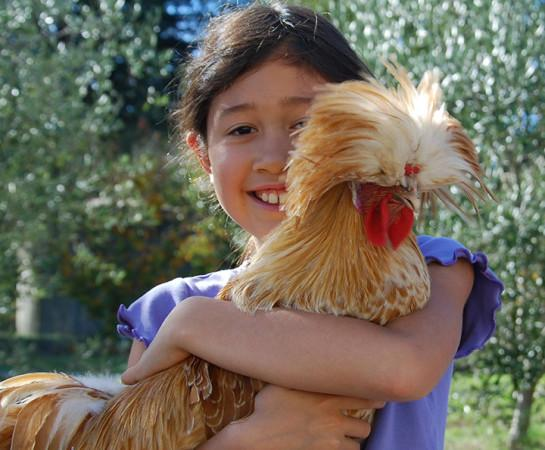 Nicole Bice and her chicken Olaf - Nicole Bice helps take care of the flock of chickens at Redwood Hill Farm. Photo 7