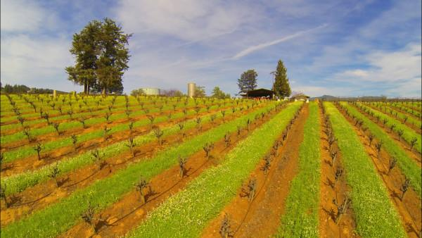The Vineyard at Mounts Family Winery Photo 3