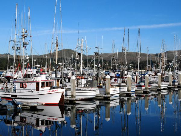 Spud Point Marina Photo 2