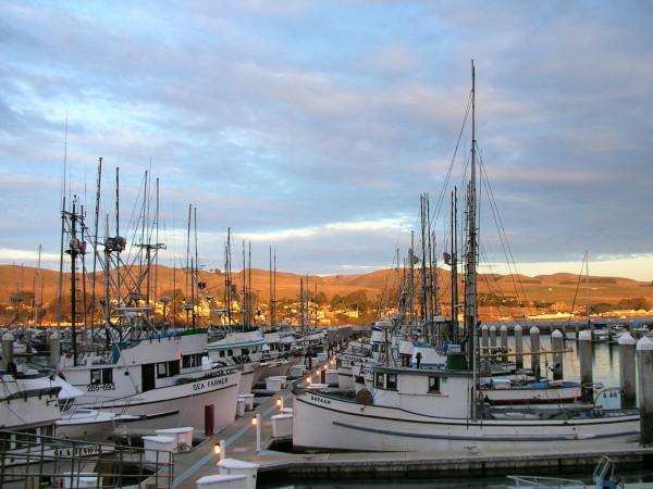 Spud Point Marina Photo