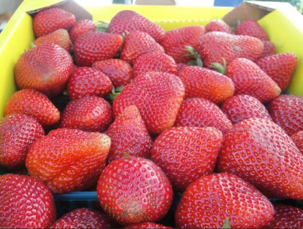 Cotati Farmers Market Photo 3