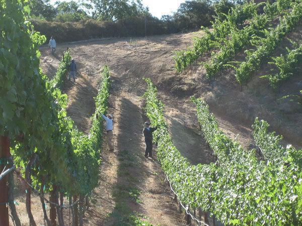 BobDog Wines & Sky Pine Vineyards | SonomaCounty.com