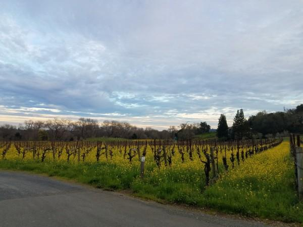 Sunset over the vineyard Photo 2