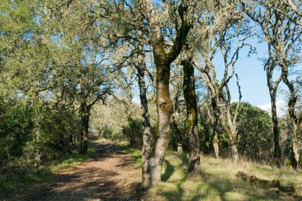 Foothill Regional Park Photo 4
