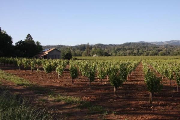 Surrounded by and overlooking vineyards Photo 2