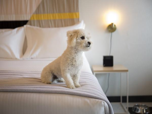 Pet friendly rooms at the Sandman Photo 12