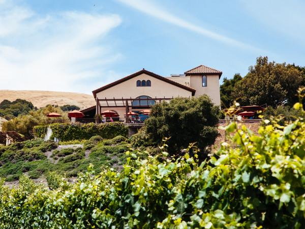 Gloria Ferrer Winery from the Vineyards Photo 5