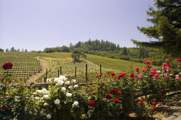 View from gardens at A. Rafanelli Winery Photo 4
