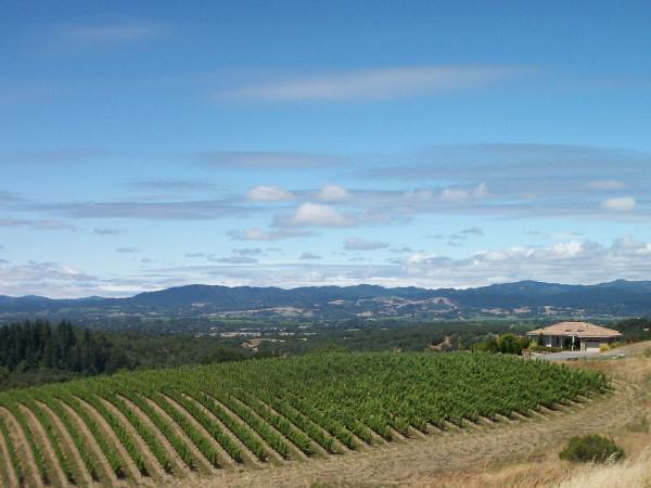 Calluna Vineyards Photo