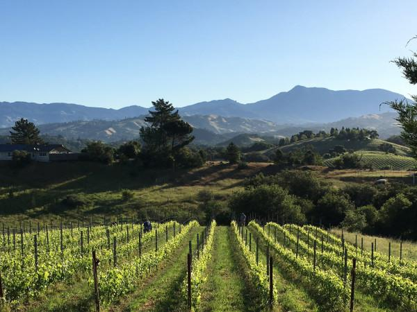 Calluna Vineyards Photo 3