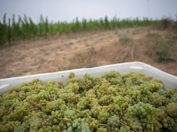 Calluna Vineyards Photo 5