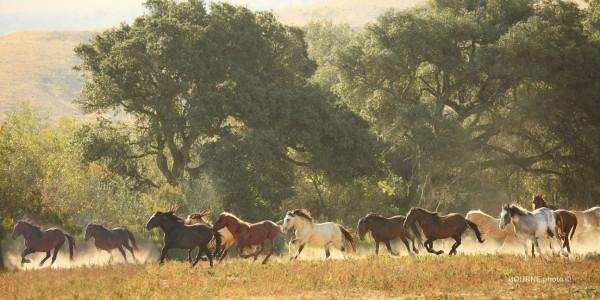 Band of Wild Horses Photo 4