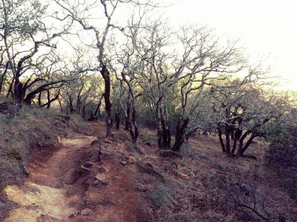 Trione-Annadel State Park Photo 2