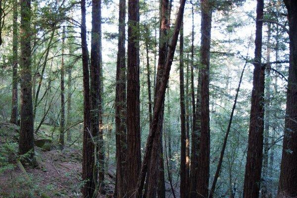 Trione-Annadel State Park Photo 5