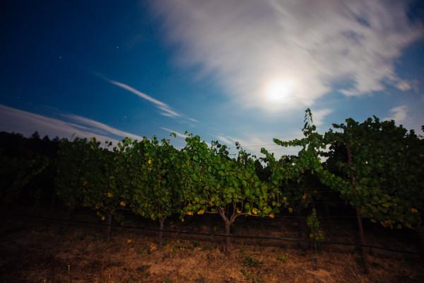 Annadel Gap Vineyard @ Dusk Photo 3