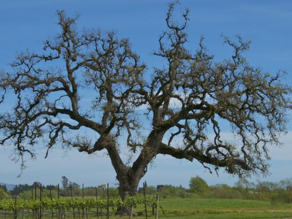 Balletto Vineyards Photo 2