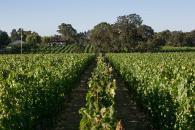 Olivet Grange Vineyard Photo 3