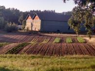 Iron Horse Vineyards Photo 5