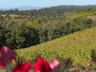 Iron Horse Vineyards Photo 6