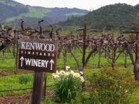 Kenwood Vineyards Photo 4