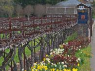 Kenwood Vineyards Photo 5