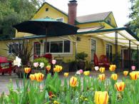 Sonoma Orchid Inn Spring Tulips Photo 2