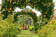 Russian River Rose Company Home and Display Garden Photo