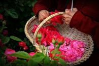 Rose Basket during Perfume Harvest Tours Photo 3