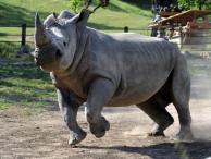 Rhino at Safari West Wildlife Preserve & African Tent Camp Photo 6