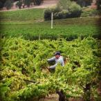Winemaker Brad Beard harvesting Photo 10