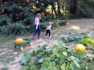 PaPa's Pumpkin Patch Photo 3