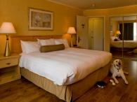 Pet friendly rooms at the Flamingo Resort and Spa Photo 8