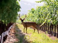 Wine Country as Nature intended Photo 6