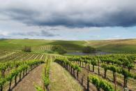 The Donum Estate vineyard Photo 2