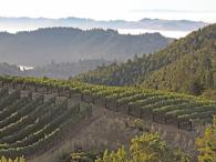Fort Ross Vineyard and Coastal Fog Photo 6