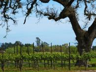 Balletto Vineyards Photo 4