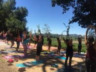 Yoga in the Vineyards Photo 2