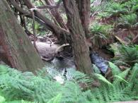 Salal Trail Photo