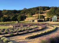 The Largest Lavender Labyrinth in California Photo 3