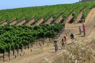 Sonoma Valley Bike Tours, Cycling IN the Vineyards Tour Photo 4