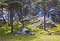 Ocean Cove Campground Photo