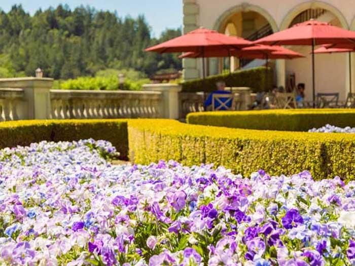 Winery with flowers