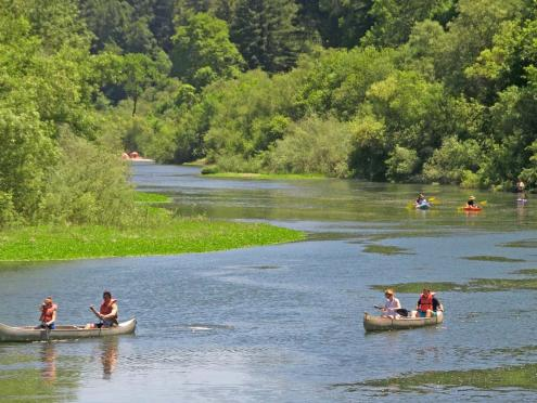 Kayaks in the Russian River, Sonoma County