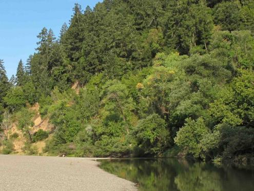 The Russian River in Forestville, Sonoma County, has many trees lining the banks