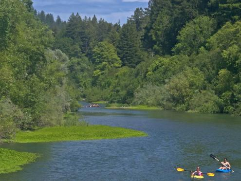 Kayakers on the Russian River in Sonoma County are surrounded by trees
