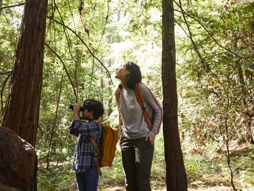 family in redwoods